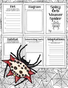 Spider Research Books