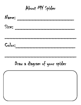 Spider Research Project