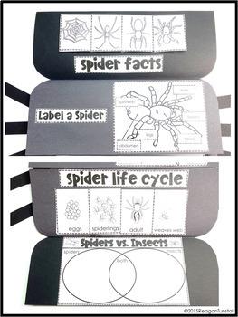 Spiders Science Interactive Activities