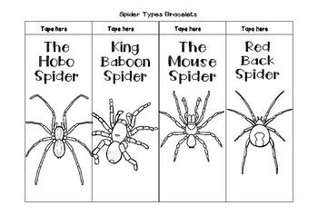 Spider Types Bracelets
