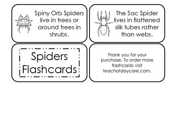 Spider Types Picture Word Flash Cards. Preschool flash cards for children.