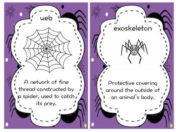 Spider Vocabulary Cards
