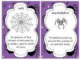 Spider Vocabulary Cards