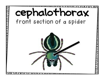 Spider Vocabulary Posters