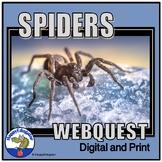 Spider Webquest Assignment
