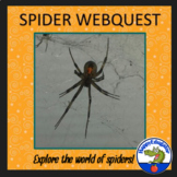 Spiders Webquest Assignment