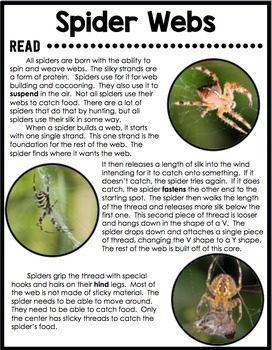 FREEBIE Spider Webs - Reading Comprehension Card