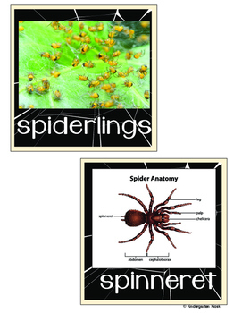 Spider Bat Theme Writing Practice