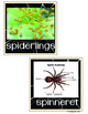 Spider Writing and Literacy Center Activities
