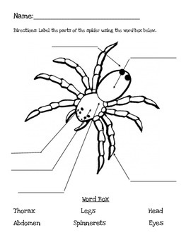 spider body part lesson by brittany fasolino teachers pay teachers. Black Bedroom Furniture Sets. Home Design Ideas