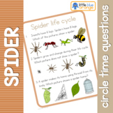 Spider life cycle circle time questions
