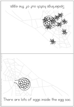 Spider life cycle coloring booklet