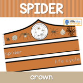 Spider life cycle crown