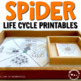 Spider life cycle mat and 3 part cards