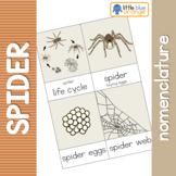 Spider life cycle nomenclature cards