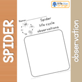 Spider life cycle observation sheet