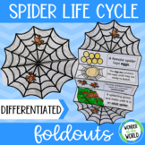 Spider life cycle foldout for interactive science notebook