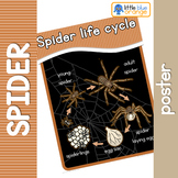 Spider life cycle poster