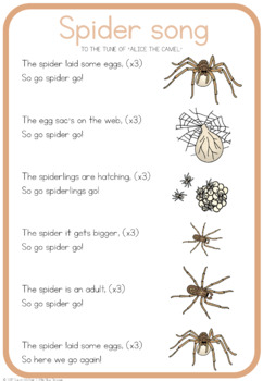 Spider life cycle song