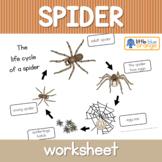 Spider life cycle  worksheet