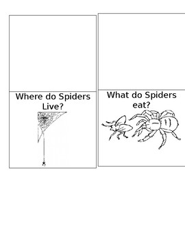 Spider's Lapbook