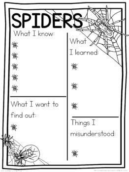 Spider schema  worksheet
