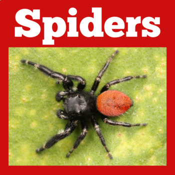 Spiders PowerPoint | Spiders Power Point | Spiders Activity