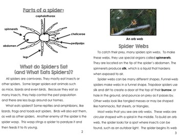 Spider Activities: Booklet and Reading Comprehension