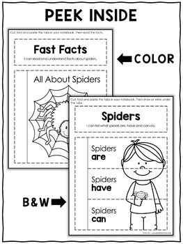 Interactive Notebook - Spider Activities