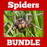 All About Spiders Bundle