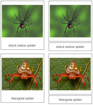 Spiders: 3-Part Cards