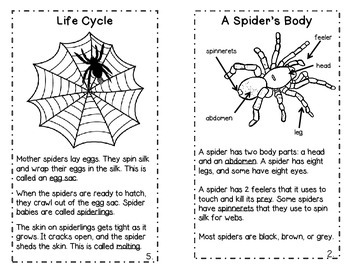 Spiders! A Science and ELA Book Study