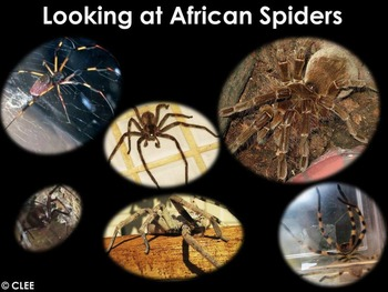 African Animals: Spiders - PDF presentation