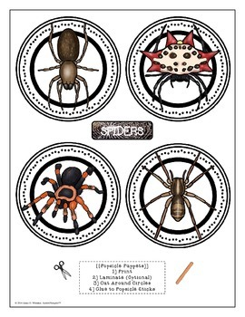 Spiders All About Spiders Interactive Research Activities