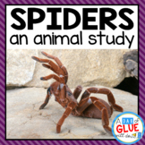 Spiders: An Animal Study