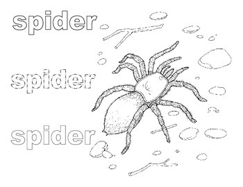 Spiders Bundle for Autism