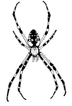 Spiders Clipart - Realistic Spiders for Personal & Commercial Use