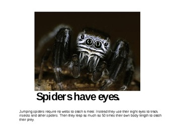 Spiders Have...Emergent Reader and Vocabulary Game