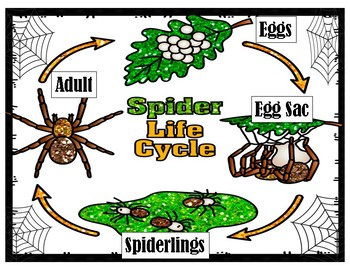 Spiders!:  Informational Book w/Photos, Activities, and Comprehension Questions