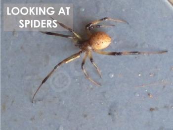 Spiders - Interactive PowerPoint presentation