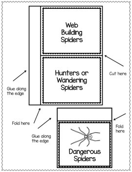 SPIDERS - INTERACTIVE LAPBOOK Filled With Templates and Spider Fact Cards