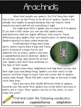 Spiders Non Fiction Text Packet [Free Sampler]