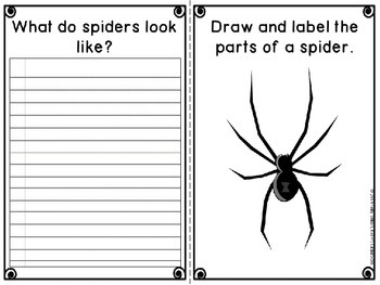 Spiders Research Project
