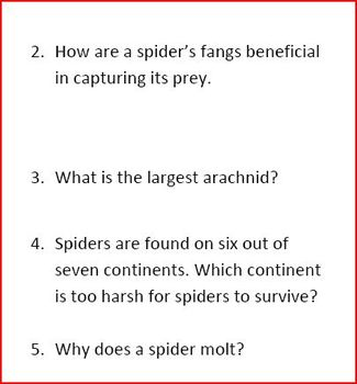 Spiders Our Friend