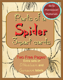 Spiders - Parts of a Spider, Montessori 3 - Part Cards