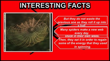Spiders - PowerPoint