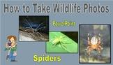 How to take Wildlife Photos - Spiders