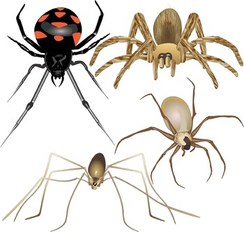 Spiders Science Clip Art