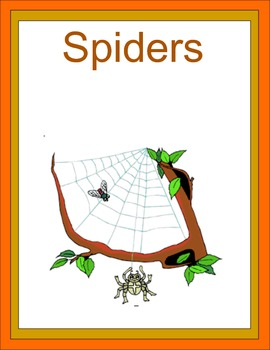 Spiders Thematic Unit