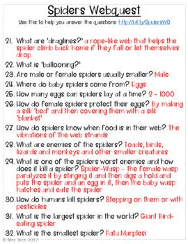 Spiders Webquest